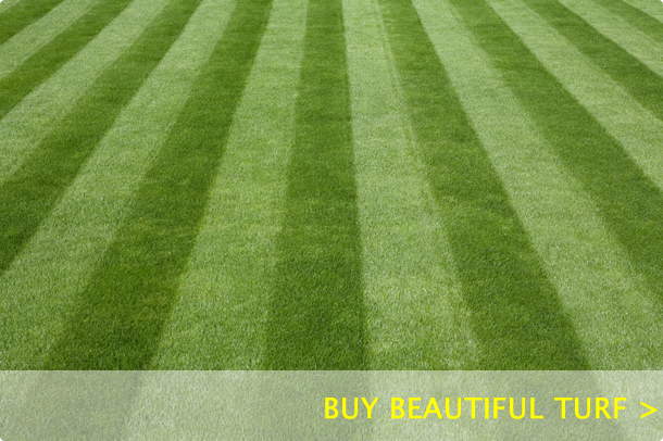 Buy Beautiful Turf